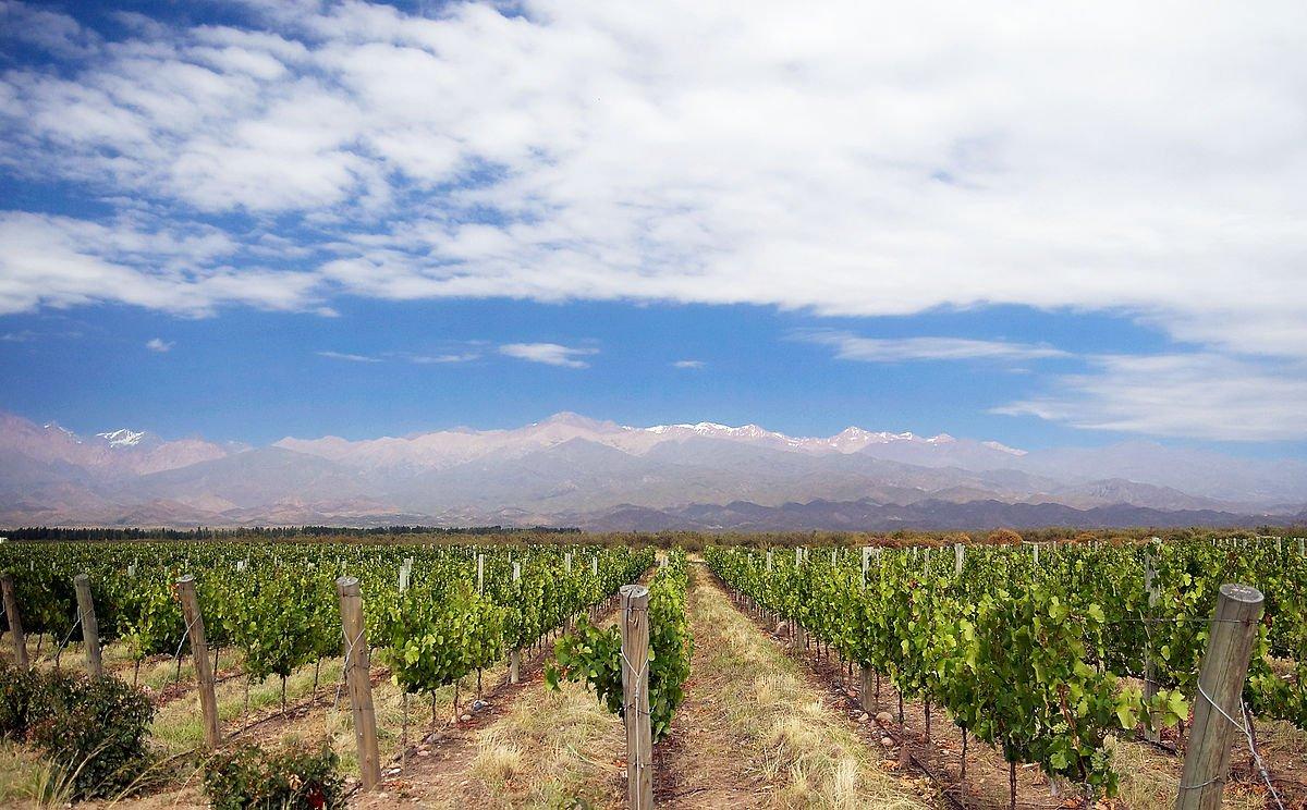 Argentinien Mendoza Weinlandschaft