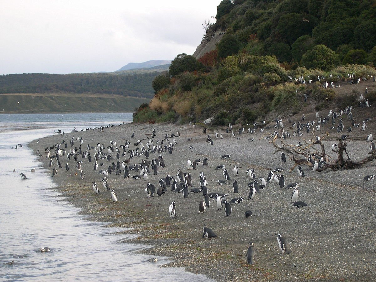 Argentinien Pinguinstrand