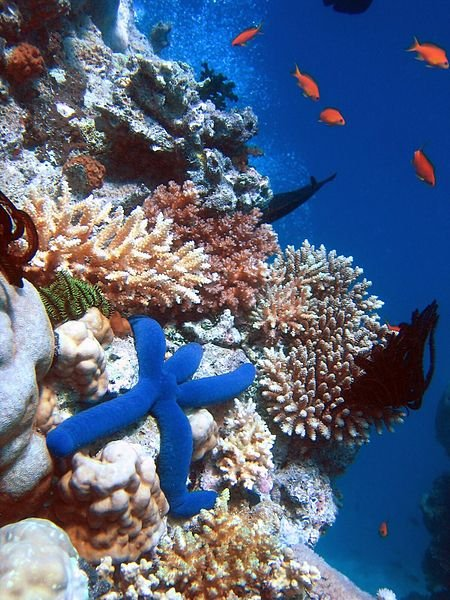 Australien Queensland Great Barrier Reef