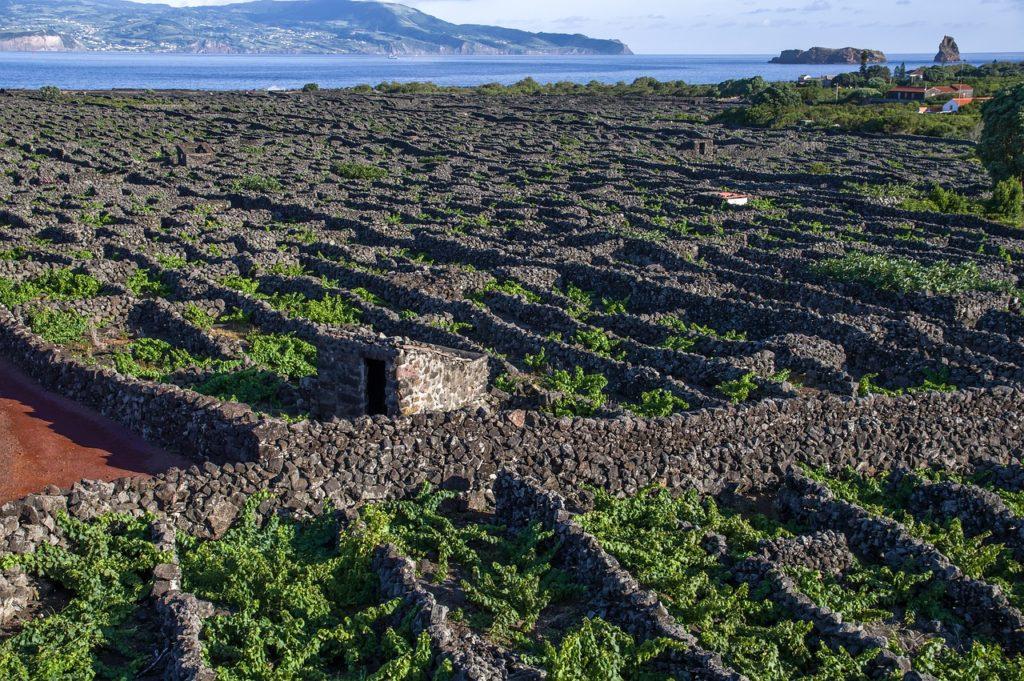 Azoren - Weingut