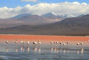 Bolivoen Uyuni Laguna Colorada