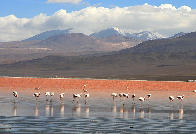 Bolivien Uyuni Laguna Colorada