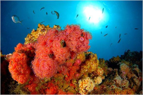 Chile Inselgruppe Juan Fernandez Riff