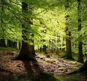 Dänemark Grib Wald