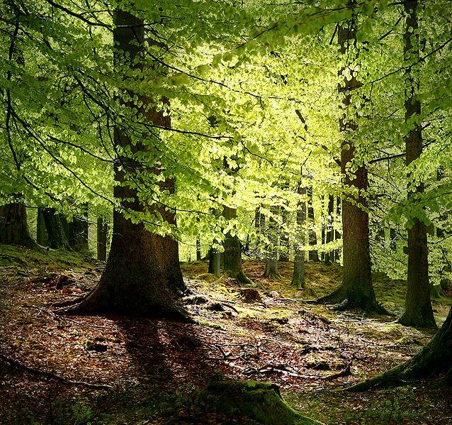 Grib Wald