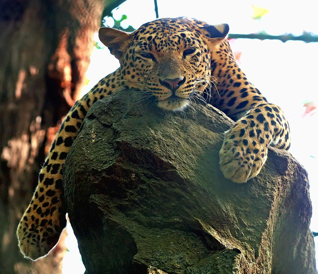Indien Bannerghatta National Park