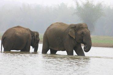 Indien Elefanten