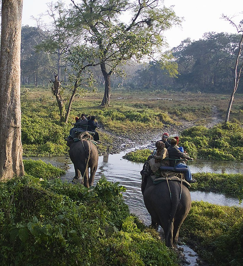 Indien Jaldapara Wildlife Sanctuary
