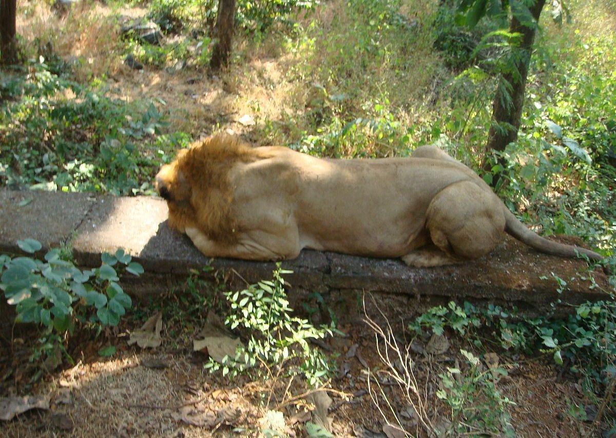 Indien Sanjay Gandhi National Park