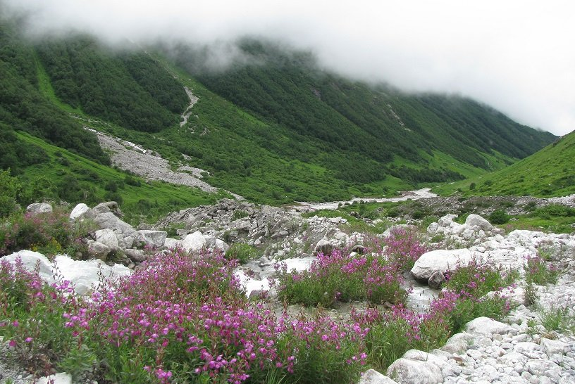 Indien Valley of Flowers