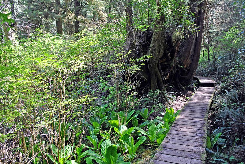 Kanada Pacific Rim National Park Rainforest Trail