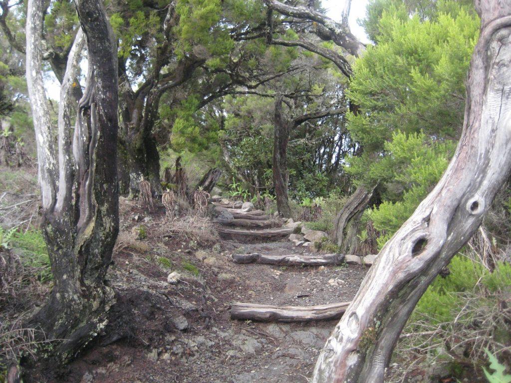 Kanaren - La Gomera