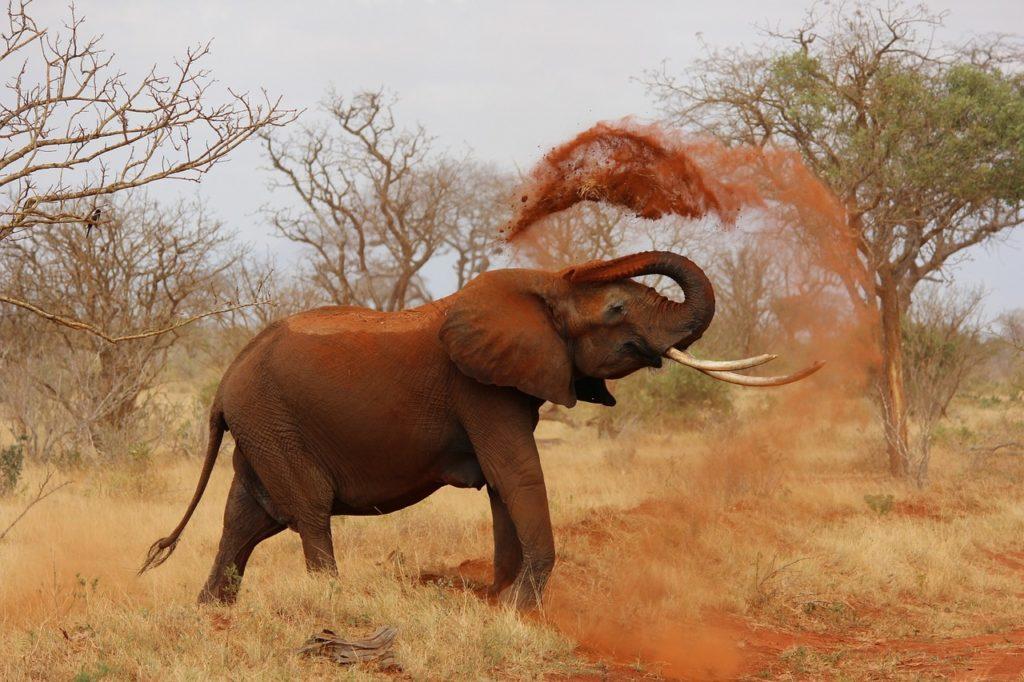 Kenia - Elefant
