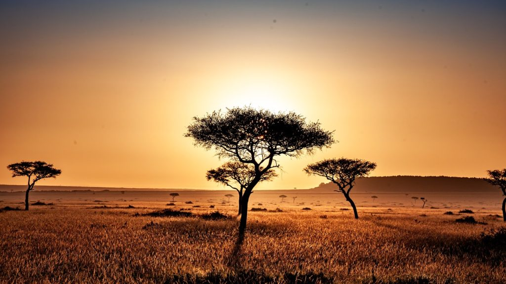 Kenia - Savanne