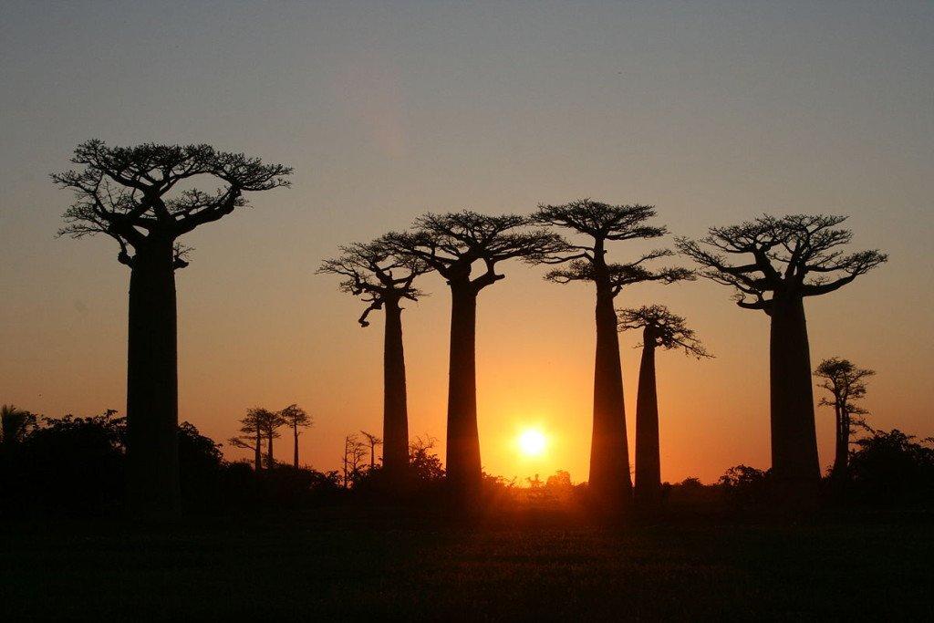 Madagaskar Strasse der Baobabs bei Sonnenuntergang