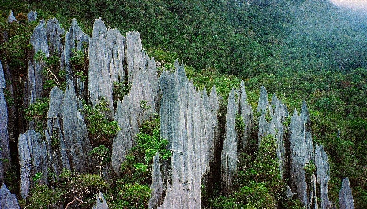 Malaysia Borneo Gunung Mulu National Park