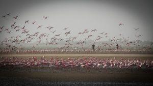 Namibia - Vogelwelt