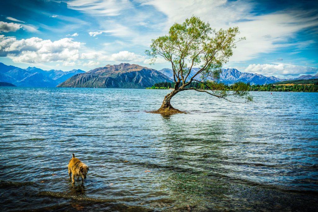 Neuseeland - Wanaka - See