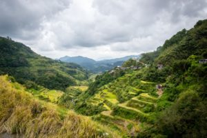 Philippinen - Reisterassen