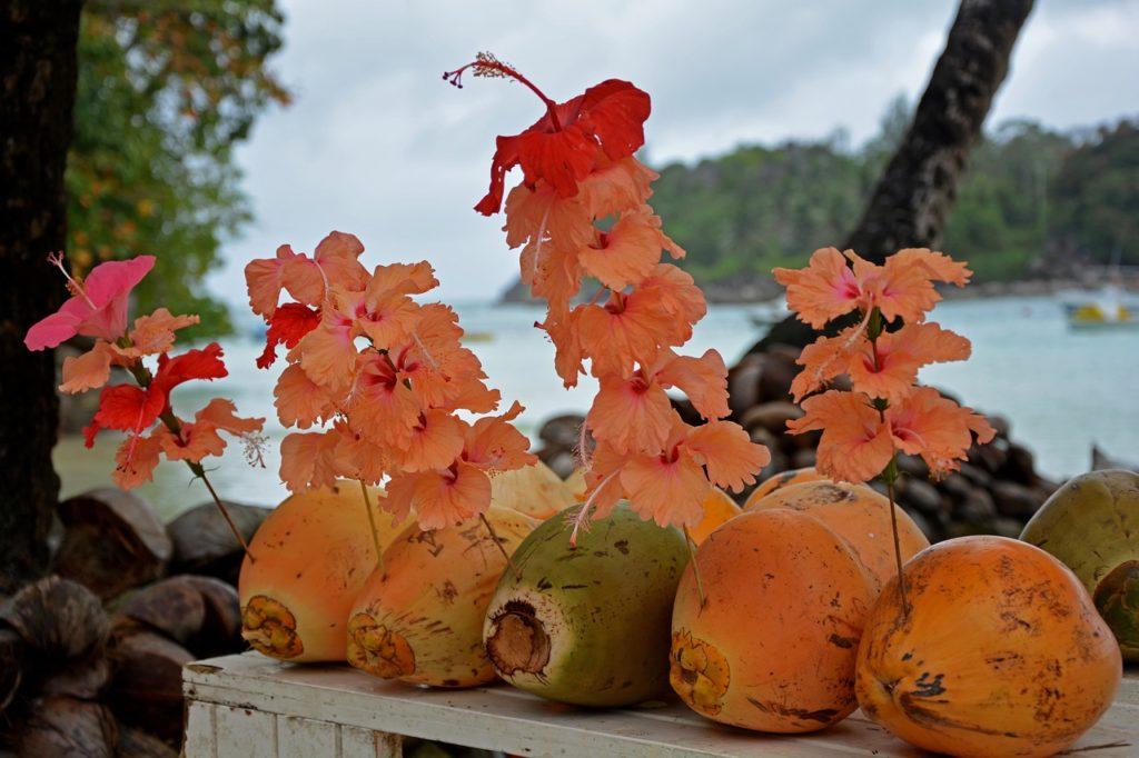 Seychellen - Kokosnüsse