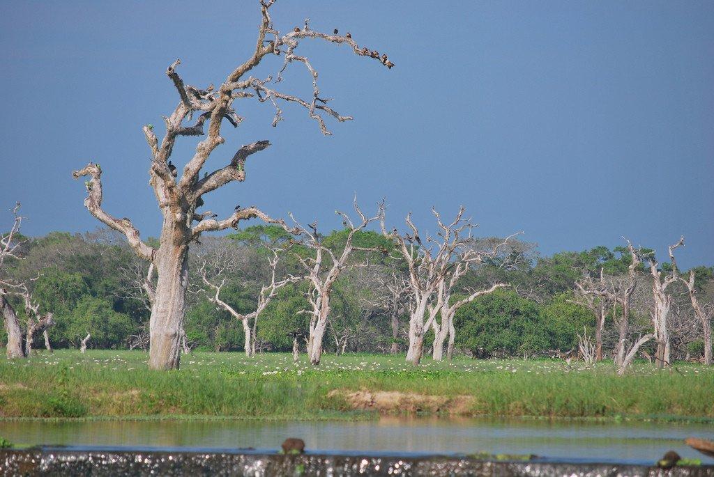 Sri Lanka Yala NP