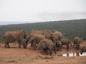 Suedafrika-Addo_Elephant_National_Park