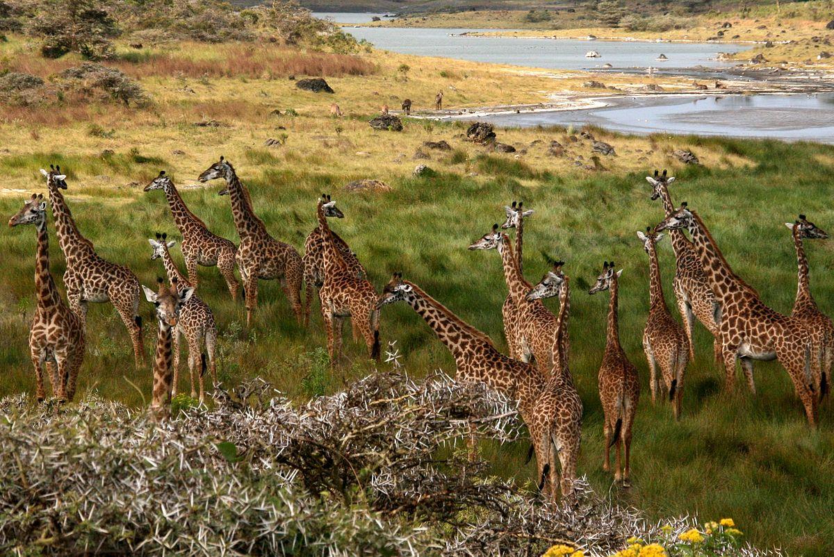Tansania Arusha Nationalpark