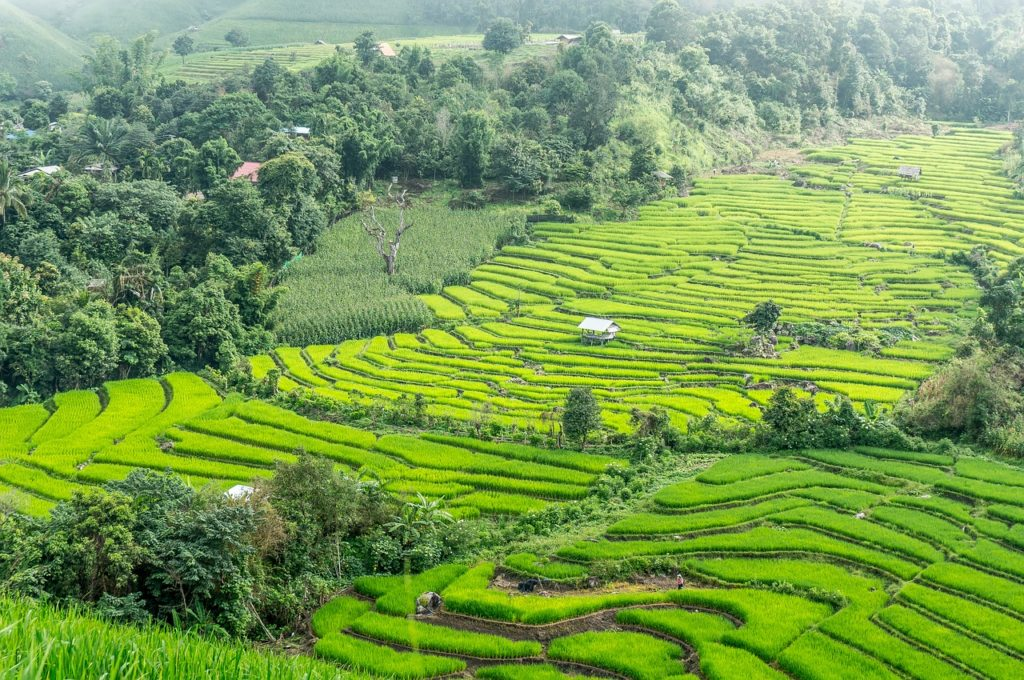Thailand - Reis Tterrassen