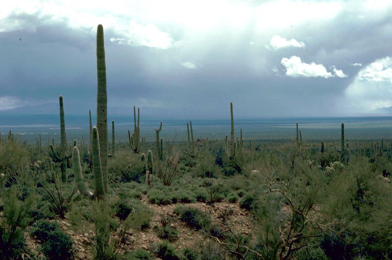 USA Trockensteppe Arizonas