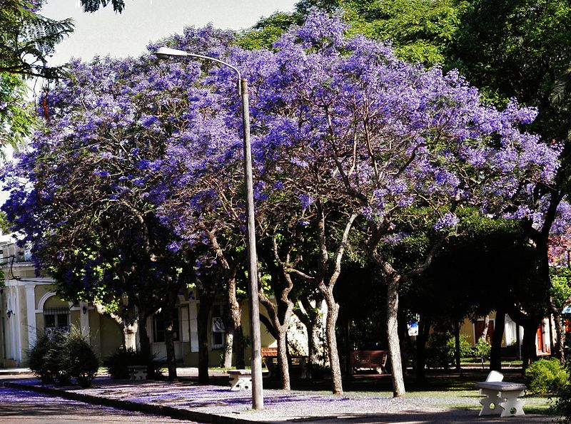 Uruguay - Río Negro - Plaza Hargain