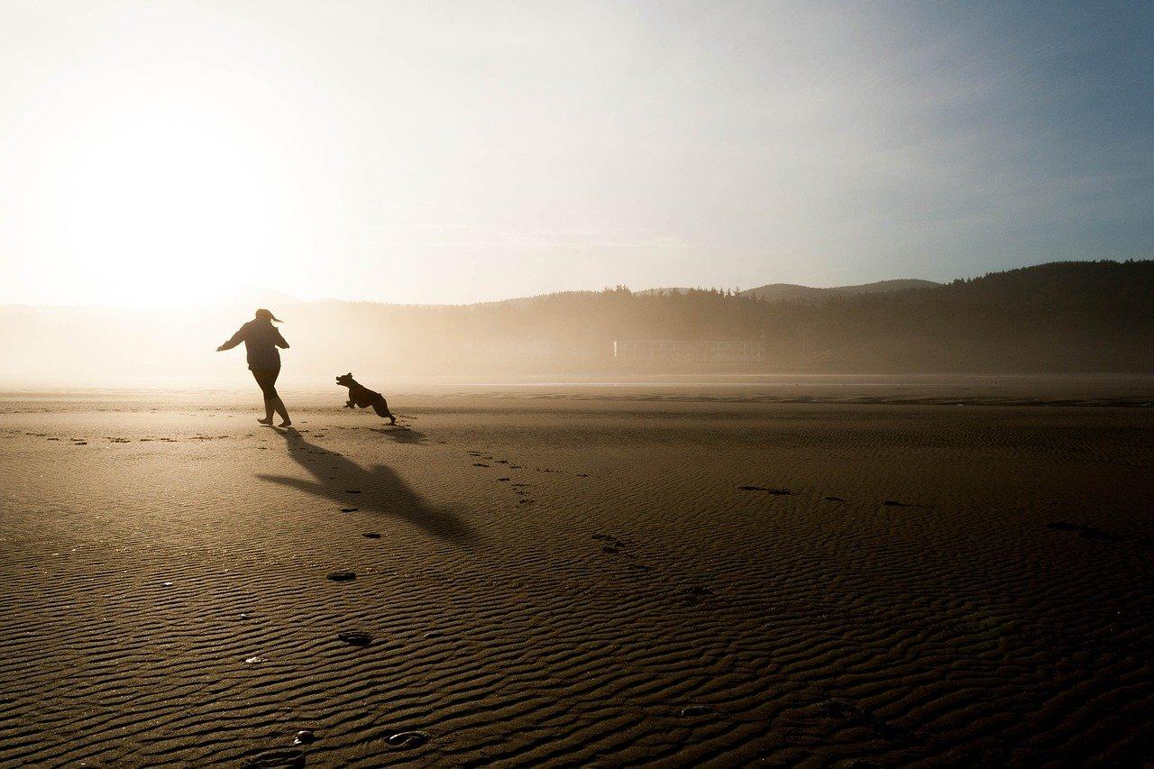 Hunde im Ausland